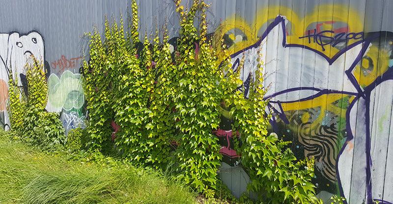 Växtlighet på bullarskärmar