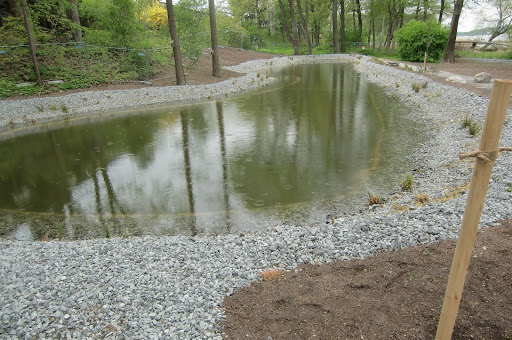 Dammar i vägmiljö